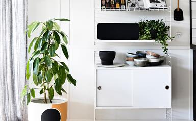 How to repot a pot plant