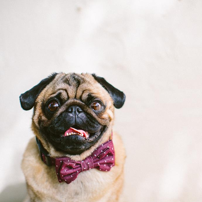 'Oh Jaffa' dog **bow tie** and collar set in Burgundy, from $40, Etsy.