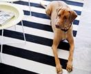 13 pet accessories so stylish you won't have to hide them away
