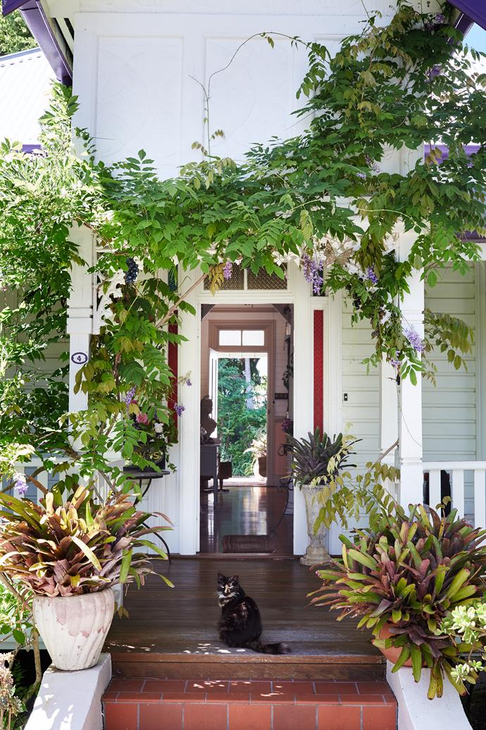 Wisteria grows with abandon over the portico. Feature pots are mass-planted with bromeliads for extra colour.
