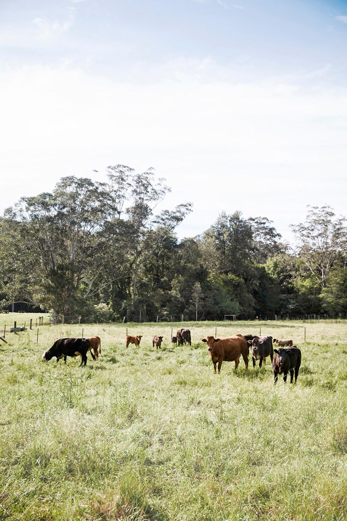With cows among the family's neighbours, there's little doubt the city has been left far behind.