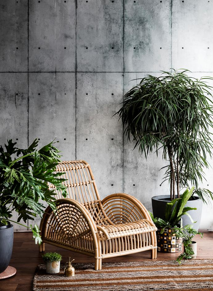 "[Find out 10 ways to style indoor plants here >](http://www.homestolove.com.au/10-ways-to-style-indoor-plants-3042|target=""_blank"") Photo: Maree Homer / bauersyndication.com.au"