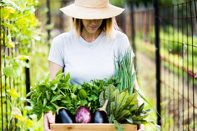 Fresh produce harvested on-site is also available for purchase.