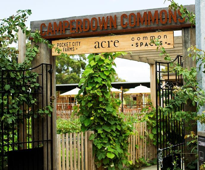camperdown commons