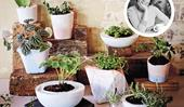 How to make your own concrete pots and planters