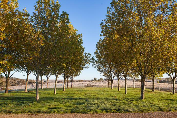 Double rows of plane trees are planted in a formal grid drawing the eye to the seat and the outer landscape beyond.