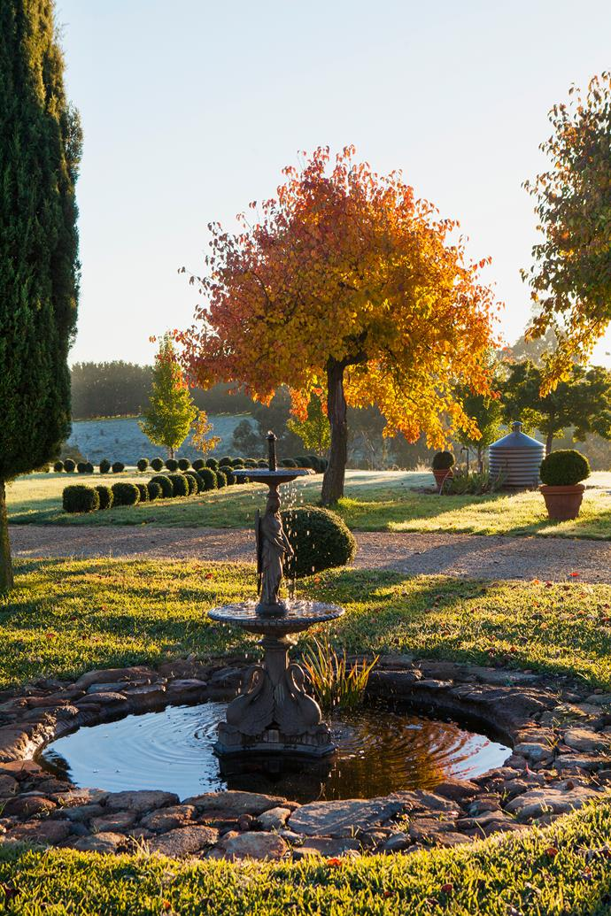 Michelle and Cliff installed this fountain at the centre of the driveway circle; in the background is an ornamental pear tree and a rectangular formation of clipped *Buxus* balls.
