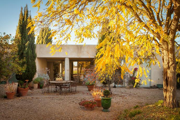 A robinia sheds its leaves in a sheltered courtyard, part of the modern additions to the original stone home