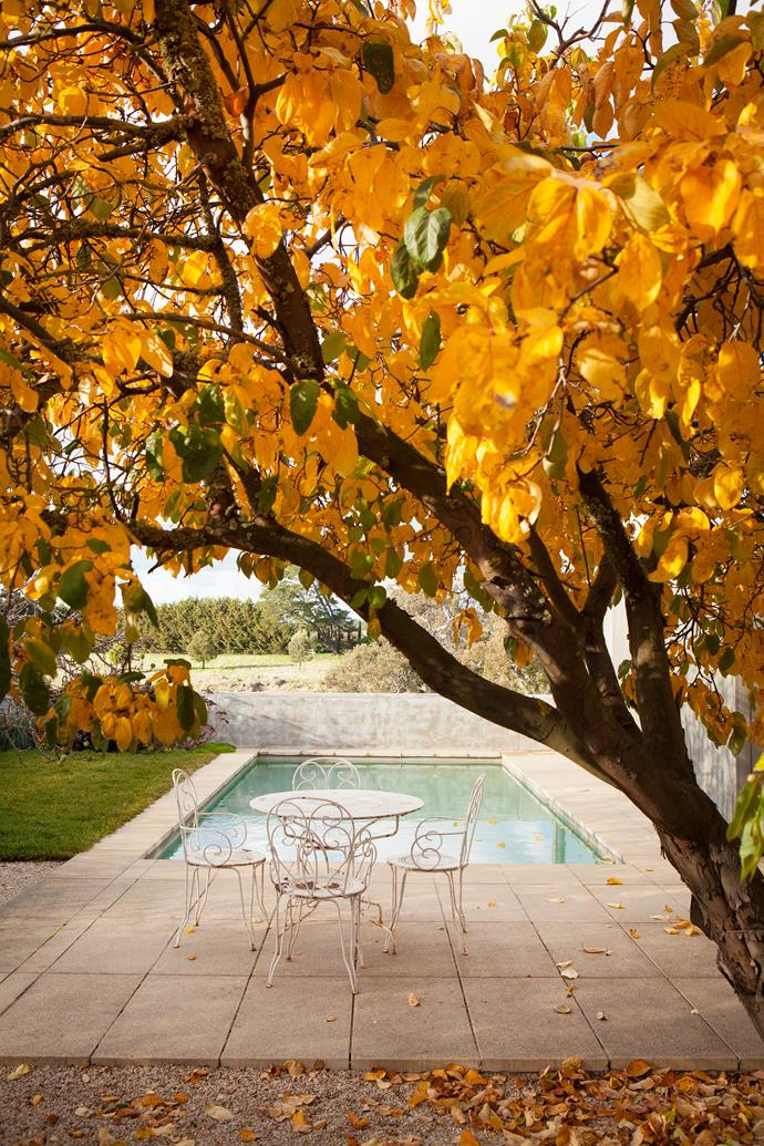 The pool with an apricot tree in the foreground.