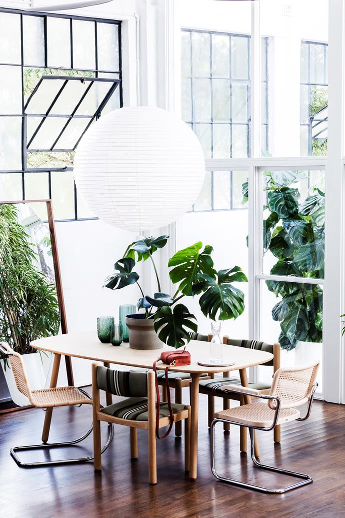 """ENO Studio """"Ombree"""" dining table, $1950, from Clickon. Thonet """"S533"""" chair, $2665, from Anibou. Dining chairs, $2640 for set of 6, from Vampt Vintage Design. Thonet """"S64"""" armchair, $2045, from Anibou. Paper lantern (90cm), $10 to hire, from Decorative Events and Exhibitions. Ficus alii plant, from $800, from Garden Life."""