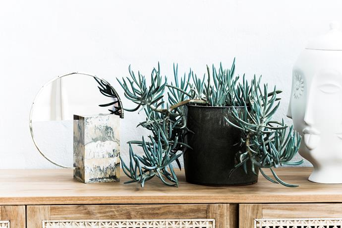 Willow buffet, $3685, from Globe West. Mirror necklace display stand, $260, from Studio Elke. Senecio spp. plant, $7.57, from Bunnings.
