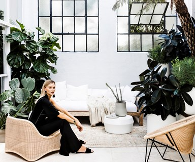 The most popular indoor plants of 2017