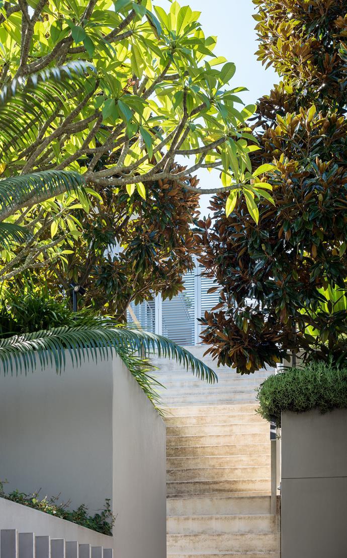 Stairs run up between mature evergreen magnolias.