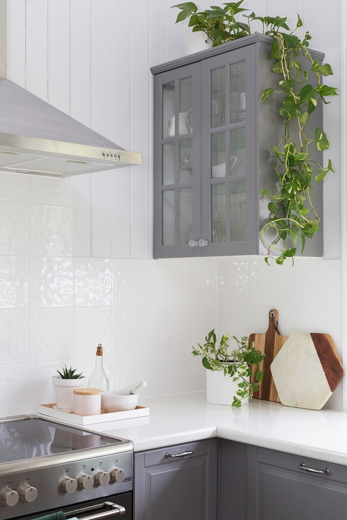 """""""My first indoor plants were the Devil's Ivy on the kitchen cabinets. I love them because they grow in low light, can survive for a long time between watering and they make the most beautiful trailing vines."""""""