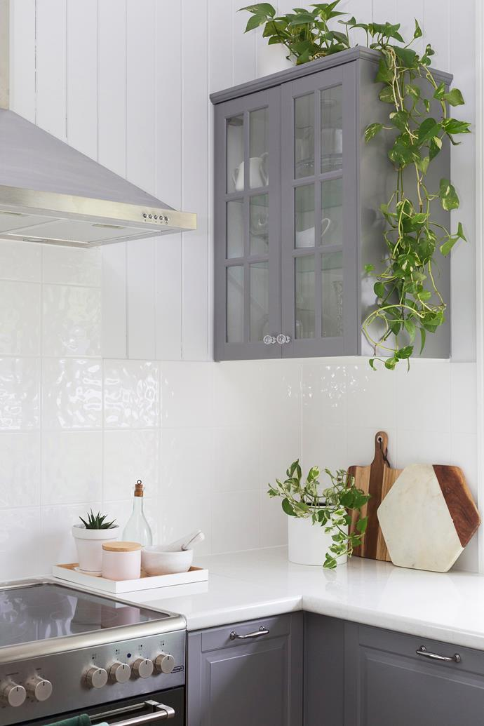 """My first indoor plants were the Devil's Ivy on the kitchen cabinets. I love them because they grow in low light, can survive for a long time between watering and they make the most beautiful trailing vines."""