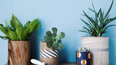 8 best indoor plant delivery services across Australia