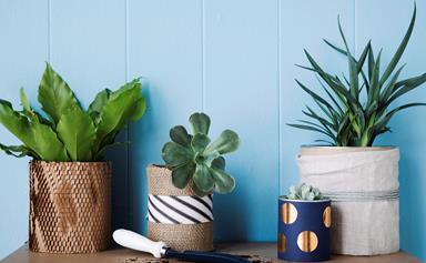 8 best indoor plant delivery services across Australia