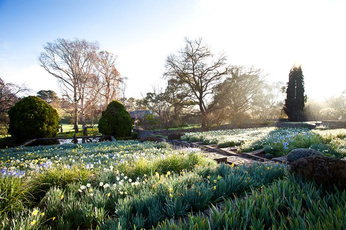 A wide view of the stone terraces that sit to the east of the lawn. This is where Charles and Irene Fairbairn bred their daffodils in the 1920s and '30s. Many of their plantings remain in the garden.