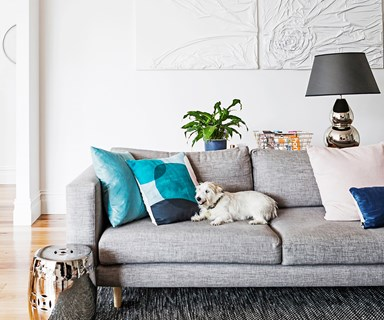 All strata apartments may soon be pet-friendly by law