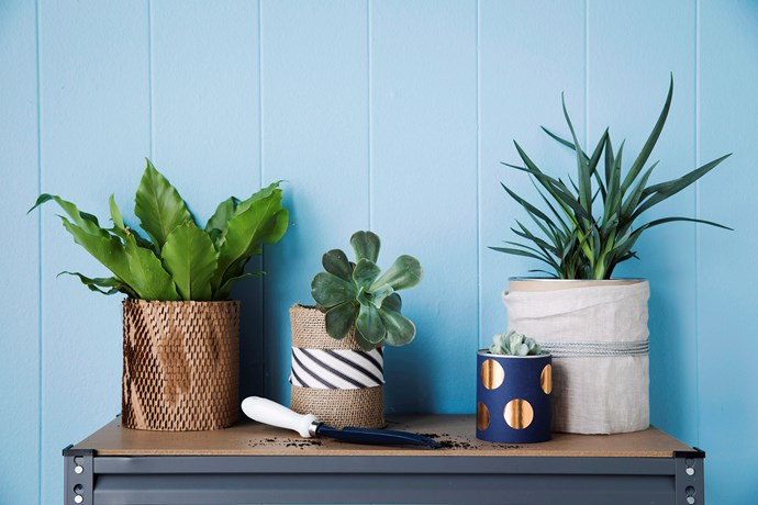 Sansevierias and succulents are *so* easy to propagate and are great for indoors or out.