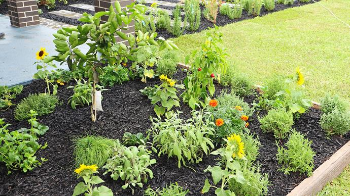 Marigolds will deter pests while the sunflowers attract bees.