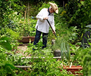 5 easy to grow vegetables