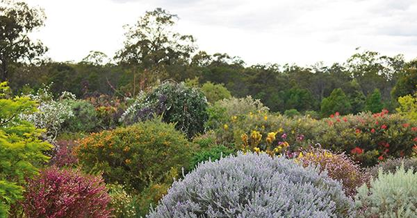 How To Pick Australian Native Plants For Your Garden Homes To Love