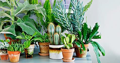 The Best Indoor Plants For Australian Homes Real Living