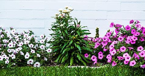 The best flowering plants for summer australian house and garden mightylinksfo