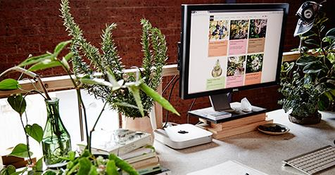 the best indoor plants for australian offices homes to love