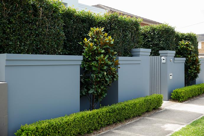 """Without greenery, this front fence would look a bit like a fortress,"" says Matt Leacy, who modified the design of an existing wall to accommodate the plantings (right). The wall now steps in, creating niches for *Magnolia grandiflora* 'Teddy Bear' trees. The clipped buxus in front and tall lilly pilly hedge behind help the wall recede. [landart.com.au](http://www.landart.com.au/