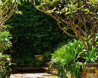 bondi garden