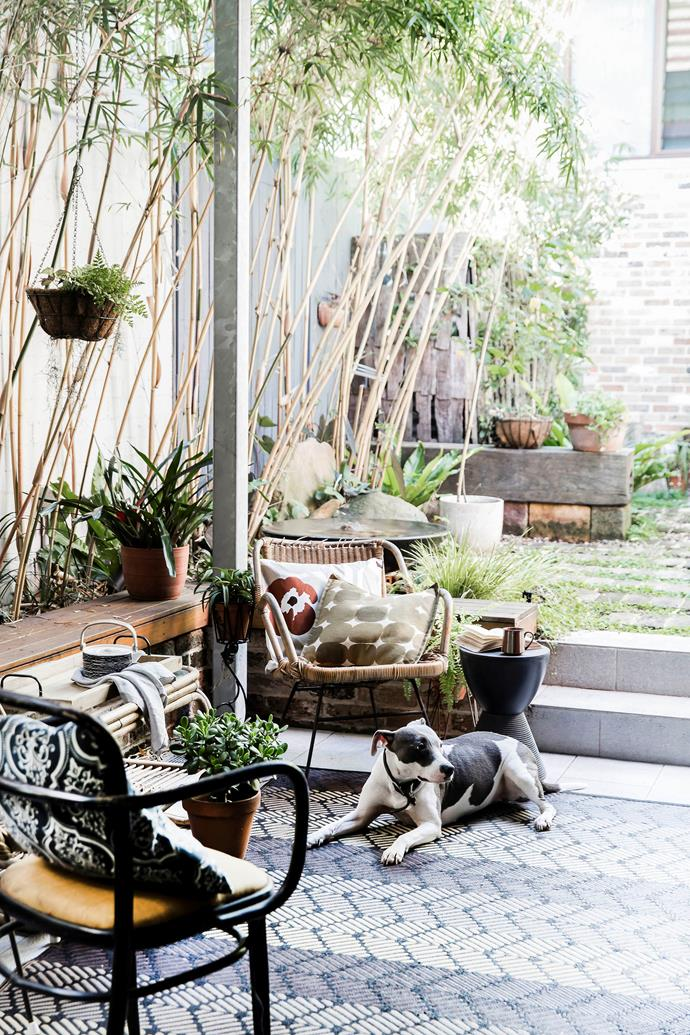 Landscape designer Georgina Reid of The Planthunter overhauled this compact outdoor space. The cane side table and chairs were eBay bargains.
