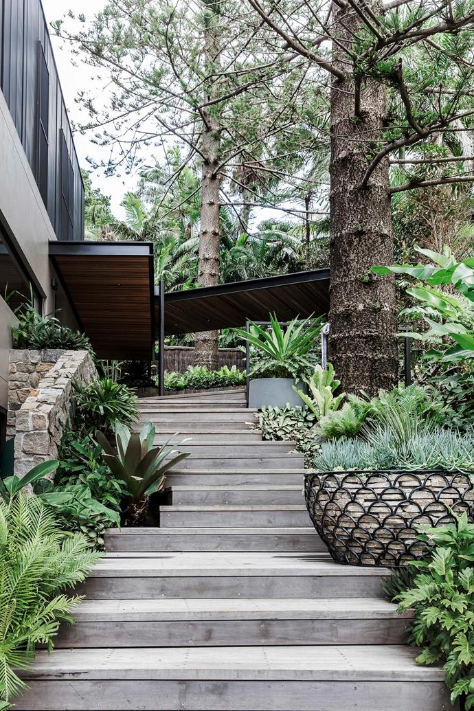 Linking the pool and lawn with the upper barbecue area, the grey ironbark stairs have landings marked by feature pots. The gabion pot by Sticks & Stones is filled with Senecio serpens; the Tait grey pot contains a swamp lily.