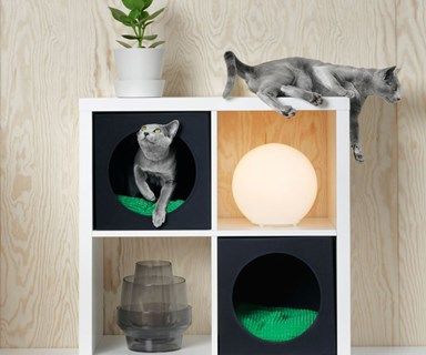 IKEA have launched their first pet furniture range and it's pawfect