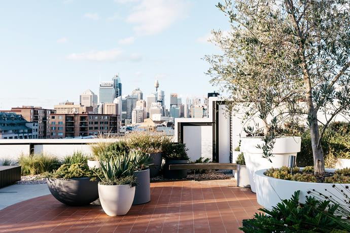 View to the Sydney CBD from the communal roof garden designed by Black Beetle.