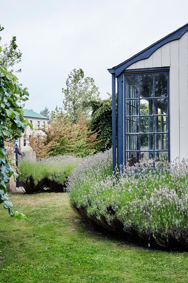 "The owner of this [European style garden in Tasmania](https://www.homestolove.com.au/european-style-garden-in-tasmania-5889|target=""_blank"") loves lavender, and large bushes of it surround and soften the edges of their cottage. *Photo: Sue Stubbs*"