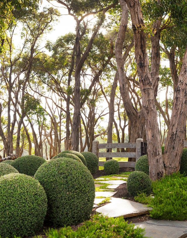 Manicured hedges are making a comeback in today's garden, usually contrasted with soft plants and trees for a sophisticated yet naturalistic look.