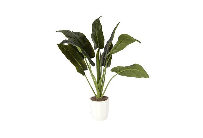 "Artificial Anthurium Plant, $25, [Kmart](http://www.kmart.com.au/product/artificial-anthurium-plant/963055|target=""_blank""|rel=""nofollow"")."