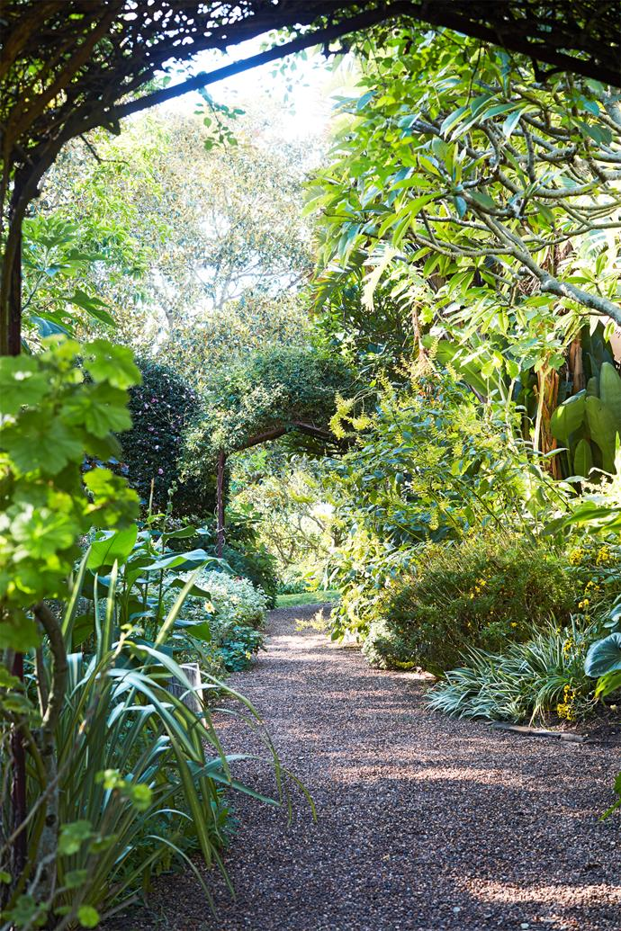 A rich mix of foliage and flowers makes this a paradise for plant lovers.