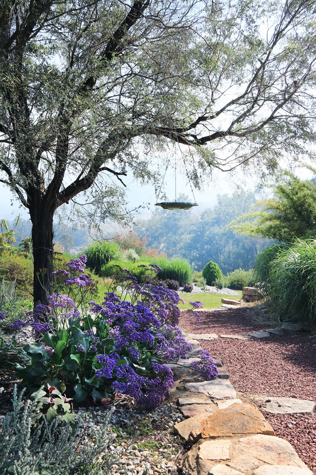 """A gravel path winds past statice (*Limonium perezii) in this gorgeous biodiverse paradise that attracts an increasing range of bird species each year. The [English-meets-Australian garden in nothern NSW](https://www.homestolove.com.au/english-style-garden-in-northern-nsw-6080