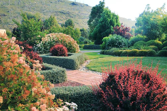 Hedges of Teucrium fruticans corral clipped Berberis thunbergii 'Rose Flow' and pink Ceanothus 'Marie Simon'.
