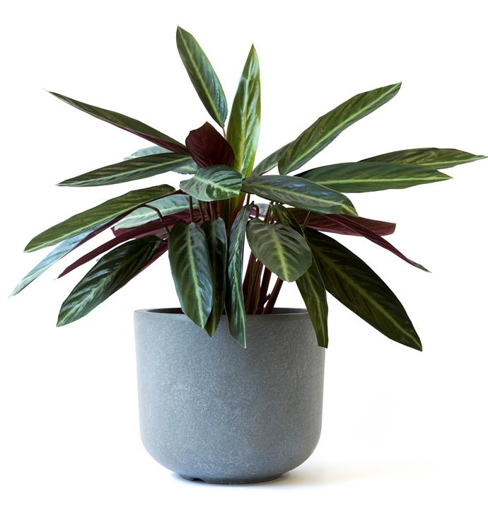 "'Buddy' pot in Grey, $49, [Hunting For George](https://www.huntingforgeorge.com/homeware/garden-outdoor/pots/buddy-pot-hunting-for-george|target=""_blank""