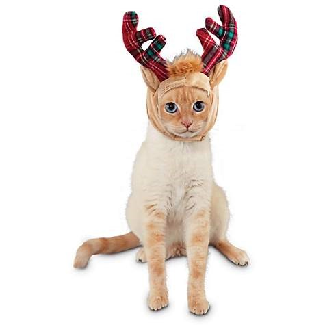 "Time for Joy Purrfect Santa Helper Cat Headpiece, $5.99, [Petco](https://www.petco.com/shop/en/petcostore/product/holiday-shop/outfits/cat-christmas-sweaters-outfits/time-for-joy-purrfect-santa-helper-cat-headpiece|target=""_blank"")"