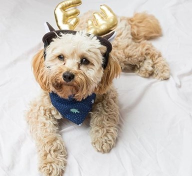 Christmas pet costumes that are too cute to handle