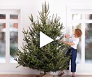 These West Elm Christmas how-to tutorials are the best we've seen yet