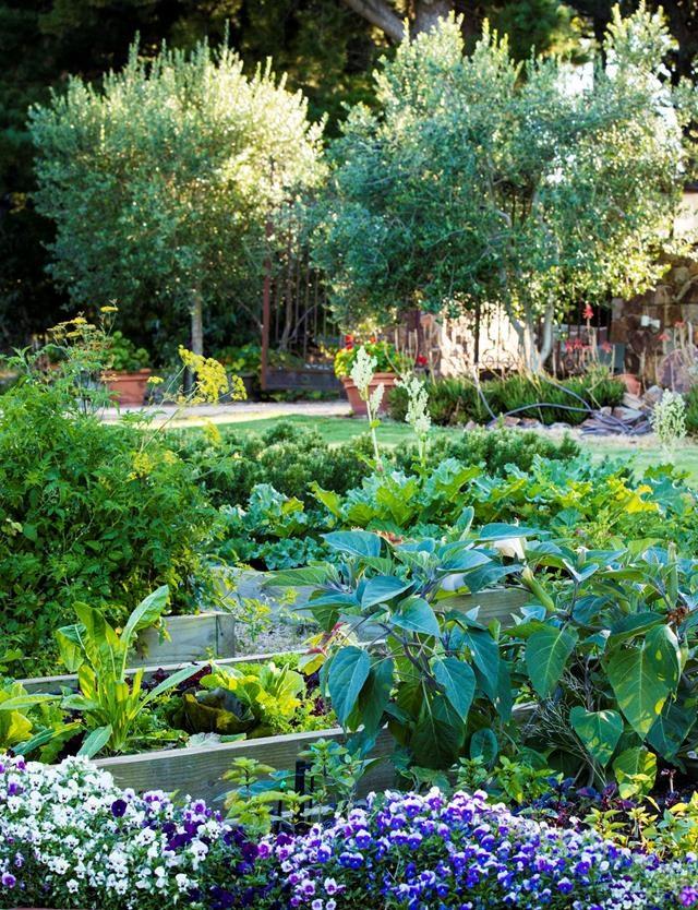 Photo: Claire Takacs / *Australian House & Garden*