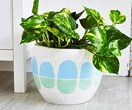 9 Colourful and patterned indoor plants made for decorating