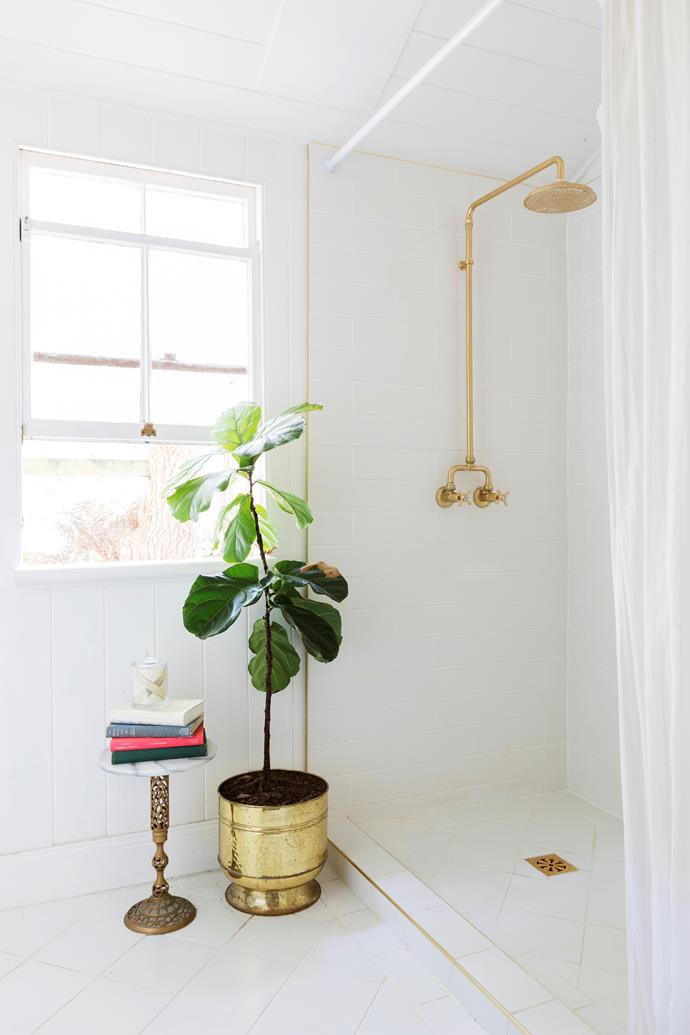 A fiddle leaf fig tree enjoys a sunny spot in the traditional-style bathroom.