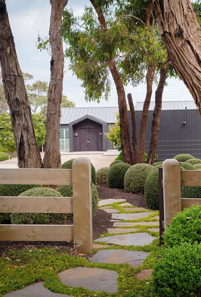 "This [manicured front yard](https://www.homestolove.com.au/manicured-garden-victoria-mornington-peninsula-5915|target=""_blank"")  includes stepping stones made out of Wistow slate and clipped balls (Buxus in front of the fence and Westringia behind), illustrating and atmospheric, yet sophisticated entry point. *Photography: Simon Griffiths*"